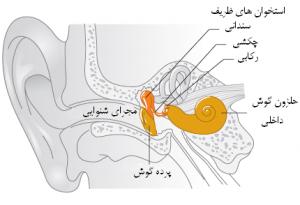 آناتومی پرده گوش