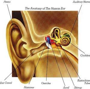 ماستوئید گوش