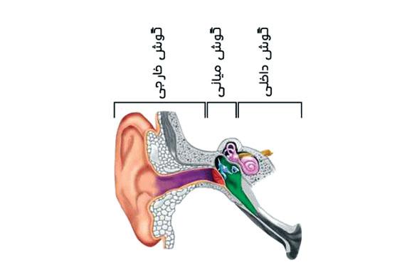 انواع عفونت گوش