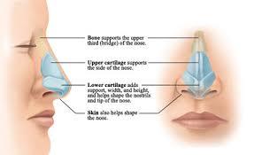 جراحی بینی های استخوانی