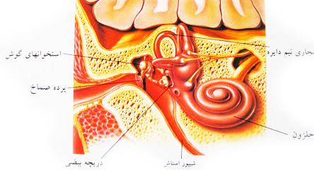 اختلال در عملکرد شیپور استاش