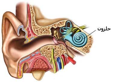حلزون گوش