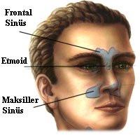 وظایف موکوس در سیستم تنفسی
